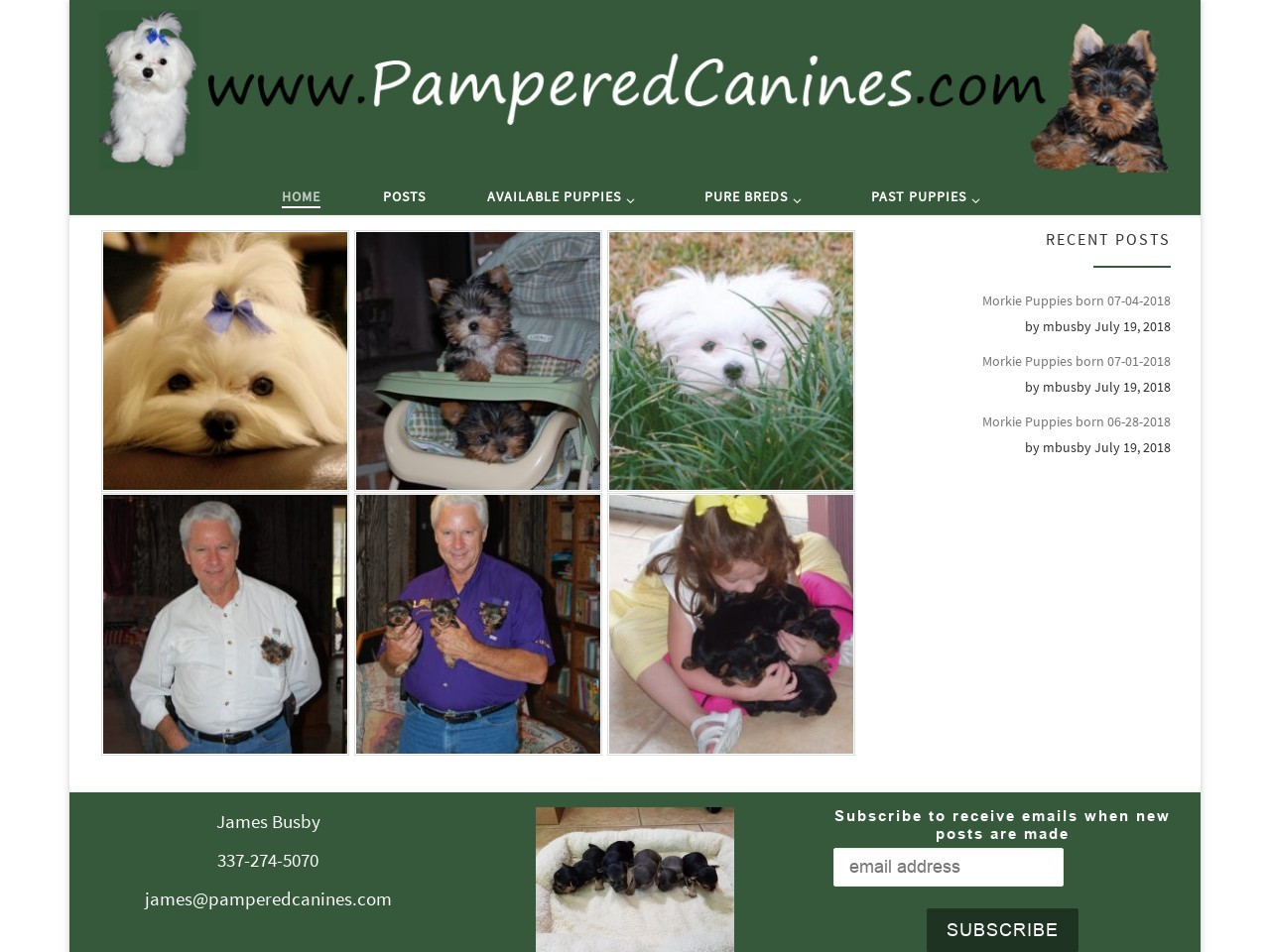 Pampered Canines